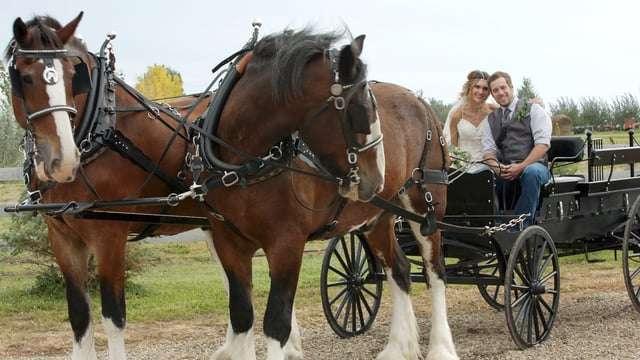 Kylie & Jaden | Brooks Country Wedding